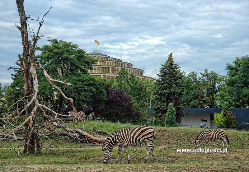 Ogród Zoologiczny Wrocław Zdjęcie Nr 1 801